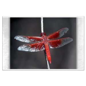 Large Poster Red Flame Dragonfly