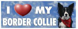 LOVE MY BORDER COLLIE PET DOG BUMPER STICKER #3060