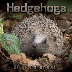 2011 Animal Calendars Hedgehogs   12 Month   30x30cm